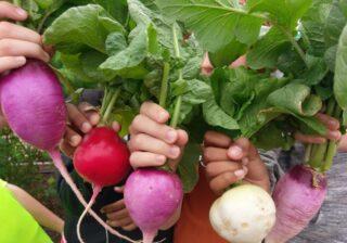 Los estudiantes muestran productos cultivados como parte de un proyecto de huerto escolar. Imagen Texas Sprouts.